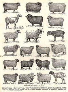 sheep Je veux cette affiche...