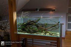 Biotope Aquarium, Betta Aquarium, Diy Aquarium Stand, Fish Tank, Studio, Aquascaping, Aquariums, Aquarium Design, Tanked Aquariums