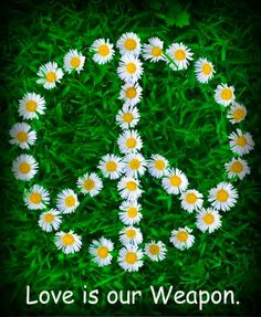 Meaghan would love this. White Daisies, Laying on the Grass Forming a Peace Sign Symbol