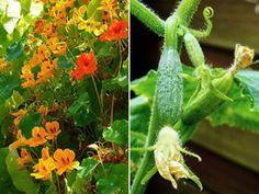 11 novenyparos 02 Garden, Flowers, Plants, Garten, Lawn And Garden, Gardens, Plant, Gardening, Royal Icing Flowers