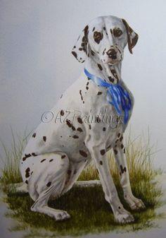 Dalmatian portrait commission in watercolour, painting by artist Anne Zoutsos