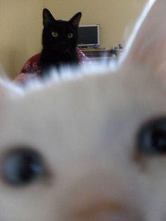 animal photobomb cat
