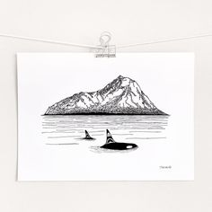 Orcas Island Pacific Northwest Killer Whale & Mountains Art | Etsy
