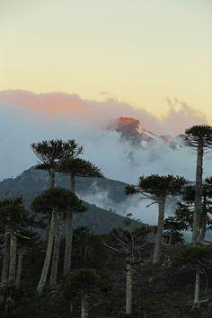 Collipulli, Región de la Araucanía.