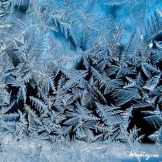 Crystallizing water forms repeating patterns in snowflakes and on frosty surfaces. The patterns have inspired claims about the power of consciousness to affect matter, as well as one of the first described fractal curves, the Koch snowflake.