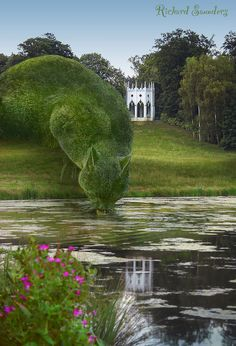 Topiary Cat, done by John Brooker, a retiree aged 75 who lives in Norfolk, UK. Topiary Cat Drinking from a Lake by Rich Saunders Topiary Garden, Garden Art, Garden Design, Lake Garden, Garden Beds, Cat Drinking, Drinking Water, Land Art, Belle Photo
