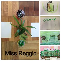 Provocations (Reggio) Plant Drawings Stage 1