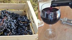 Homemade Italian Wine - How to make wine at home from grapes without yeast and sugar Making Wine From Grapes, Making Wine At Home, Make Your Own Wine, Wine Making, Grape Wine Recipe, Chicken White Wine Sauce, Homemade Wine, Grape Juice, Vegetables
