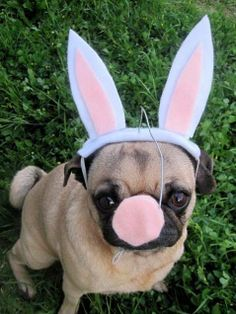 21 Adorable Animals Dressed Up For Easter