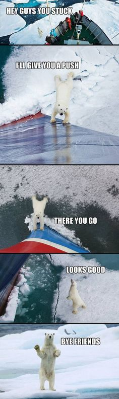 You stuck? Polar bears are so helpful.