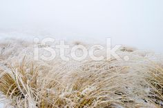 Ice on Tussock Grass, New Zealand royalty-free stock photo Abstract Photos, Image Now, New Zealand, National Parks, Royalty Free Stock Photos, Weather, Ice, Cook, Ice Cream