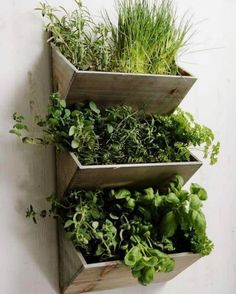 Now this is what we call multipurpose! Any free wall space in your kitchen? Dress it up with a hanging herb garden. Functional ✔️Beautiful ✔️