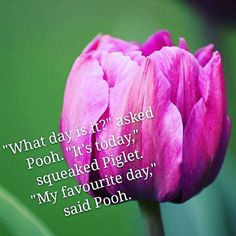 Mindfulness is important not only in these times Trust Winnie the Pooh and by association A A Milne to remind us to take pleasure in every day and to treat each as your favourite Good morning What Day Is It, Just Go, Tulip, Nikon, Beautiful Flowers, Trust, Mindfulness, Times, My Favorite Things