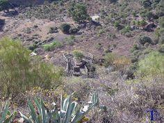 Mirador en la Caldera de Bandama 1 #Spain #CanaryIslands #GranCanaria