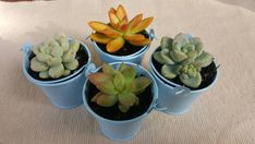 This item is unavailable Succulent Wedding Favors, Wedding Favours, Buy Succulents Online, Rosettes, Etsy Shop, Shapes, Handmade Gifts, Plants, Check