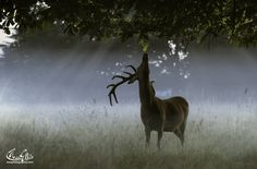 Photo Breakfast Stag style by Max Ellis on Oh Deer, Secret Places, Animal Kingdom, Animal Pictures, Giraffe, Beautiful Pictures, Horses, Photography, Animals