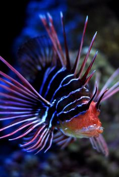 Some information and pictures about deep sea fish weird deep sea fish This weird deep sea fish are weird and most mysterious spec. Underwater Creatures, Underwater Life, Beneath The Sea, Under The Sea, Dragon Fish, Deep Sea Creatures, Ocean Photos, Deep Sea Fishing, Sea Monsters
