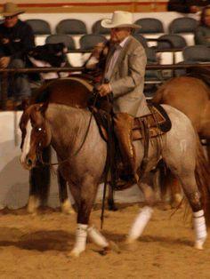 Feedlot Horses Texas