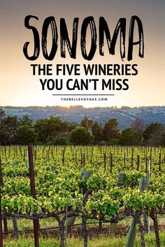 Top 5 Wineries to Visit in Sonoma California. Sonoma Valley California Wineries. Travel in North America.