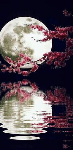 ~ Spring reflecting pool and the argent moon.