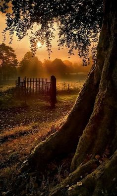 ...Sunrise Gate.. Ireland...