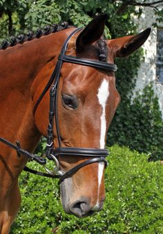 The Brentina Dressage Bridle is part of the Grand Prix Collection from Nunn Finer. A very elegant bridle made of superb quality American leather and expertly crafted. The bridle features an extremely