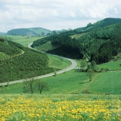 Landscape and country road in the Sauerland, Germany