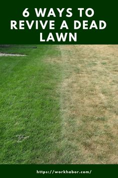 If your lawn is dead or dying, you can revive it. Here are ways you can use to revive a dead lawn. If your lawn is dead or dying, you can revive it. Here are ways you can use to revive a dead lawn. Garden Care, Grass Fertilizer, Lawn Repair, Lawn Care Tips, Fall Lawn Care, Lush Lawn, Lawn And Landscape, Landscape Design, Lawn Maintenance