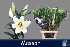 Massari