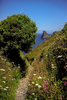 Bossiney Cove: Boscastle to Tintagel (Cornwall, England) von Matt Keyworth - Tintagel Cornwall, Devon And Cornwall, North Cornwall, Into The West, Photos Voyages, All Nature, English Countryside, Beautiful Landscapes, Land Scape