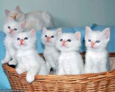 Sometimes baskets of white kittens get photo bombed by not as white kittens.