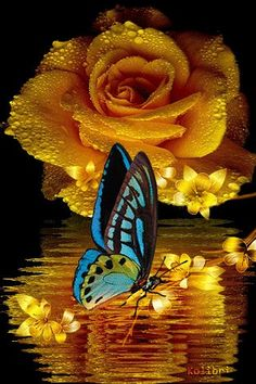 Beautiful Flowers Wallpapers, Beautiful Rose Flowers, Beautiful Nature Wallpaper, Love Wallpaper, Beautiful Butterflies, Amazing Flowers, Love Flowers, Butterfly Gif, Butterfly Pictures