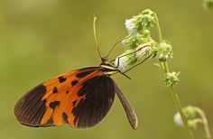 @beastusa  1,500 Butterfly Species Found in Single Park : Discovery News http://news.discovery.com/animals/insects/1500-butterfly-species-found-in-single-park-160318.htm … Anne's favorite park!