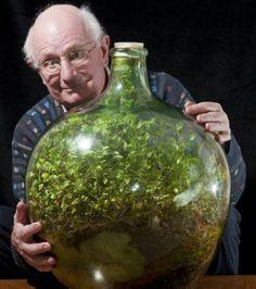 Un incroyable jardin se développe dans une bouteille fermée depuis 50 ans