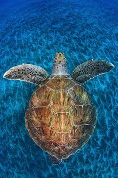 Wildlife Photographer of the Year 2013: le migliori foto di animali e natura di quest'anno (FOTO)