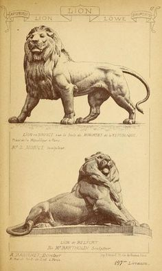 Materials and documents of architecture and sculpture : classified alphabetically Animal Sculptures, Sculpture Art, Animal Drawings, Art Drawings, Fu Dog, Lion Art, Illustration, Drawing Sketches, Lions