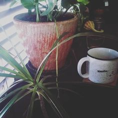 Slow start this morning. Enjoying coffee with my loves. Happy Sunday from Sprout + Stem! ☕🌿 #plant #plants #plantsofinstagram #plantlove #plantlady #plantporn #plantgang #plantbabies #plantsmakemehappy #plantsmakepeoplehappy #houseplants #urbanjungle #growingthings #greenthumb #phytophilous #greenry #pottery #jackalopepottery #sunday #sundayvibes #butfirstcoffee #coffee #coffeeandplants #slow #sproutandstem