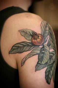 Botanical illustration of medlar fruit done by Alice Kendall @ Wonderland Tattoo in Portland, Oregon.