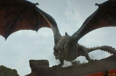A surprising real-life animal was used as a reference for Daenerys' dragons