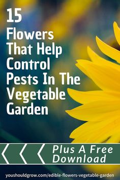 Companion planting can control pests in the organic vegetable garden. Flowers in your veggie garden are not only beautiful, but they can also be food! Try these 15 flowers and grab the full list of 37 edible flowers and their ideal vegetable companions! Growing Tomatoes In Containers, Growing Vegetables, Gardening Vegetables, Regrow Vegetables, Veggies, Companion Planting Chart, Companion Gardening, Backyard Vegetable Gardens, Organic Gardening Tips