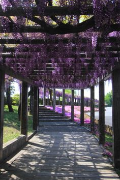Corridor of Wisteria, Toba, Kyoto, Japan