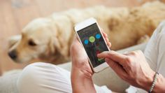 Dog trackers can be used to do everything from locating lost pets to monitoring their health.