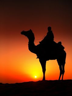 Camel and rider in silhouette, Rajasthan India Silhouette Photography, Desert Life, Desert Sunset, Animal Silhouette, Jolie Photo, Arabian Nights, Incredible India, Silhouettes, Sunrise