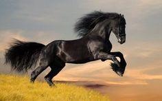 Caballo Mustang salvaje