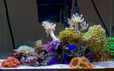 Each month we feature a member of the community and their reef tank to show the many successful ways to keep a reef aquarium. Saltwater Aquarium Setup, Coral Reef Aquarium, Nano Aquarium, Aquarium Design, Saltwater Tank, Marine Aquarium, Aquarium Fish Tank, Aquarium Ideas, Marine Fish Tanks