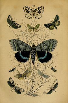 Plate 29, Manual of the Natural History of the Three Kingdoms, 1850