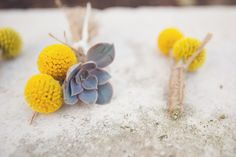 Boutonnieres with yellow Billy Balls and Succulents. Love the colors!