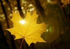 I love Fall. And sunlight. And leaves. And sunlight shining through leaves in the fall.