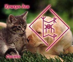 """""""Кошкин дом"""" (поиск хозяина/дома для ЛЮБЫХ животных, птиц и тд). Автор: Сольвейг"""