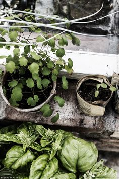 ©vintagepiken #garden   #saltstudionyc